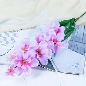 Цветы искусственные 'Сиреневая орхидея Гуарианте' Ош