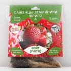 Strawberry seedling FRIGO Faith (Faith) A (9-15 mm), 5 pcs