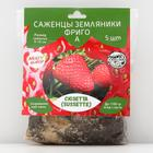 Strawberry seedling FRIGO Suzette (Sussette) A (9-15 mm), 5 pcs