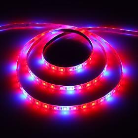Светодиодная лента для растений Luazon Lighting, 3м, 60SMD5050/м, 14Вт/м, IP65, 220 В