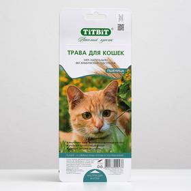 Трава TiTBiT для кошек, пшеница, 50 г