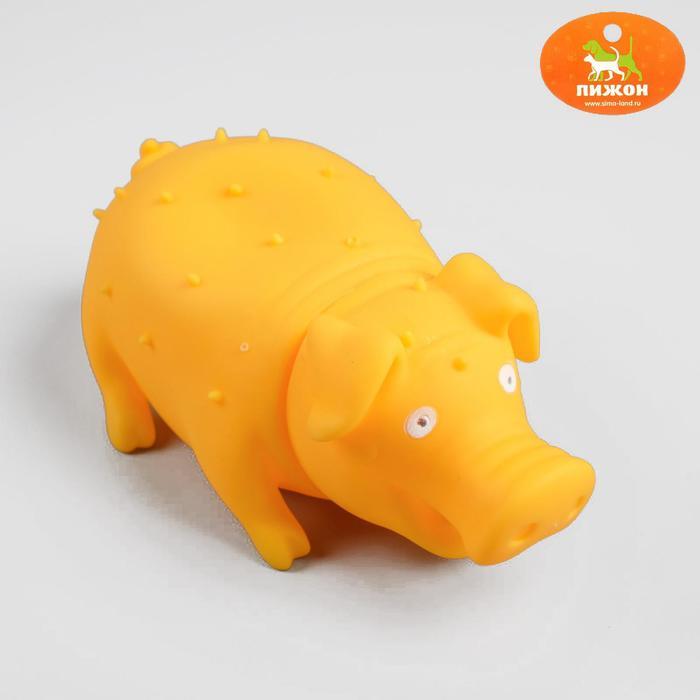 """Игрушка резиновая """"Веселая свинья"""" для собак, хрюкающая, 19 см, микс цветов"""