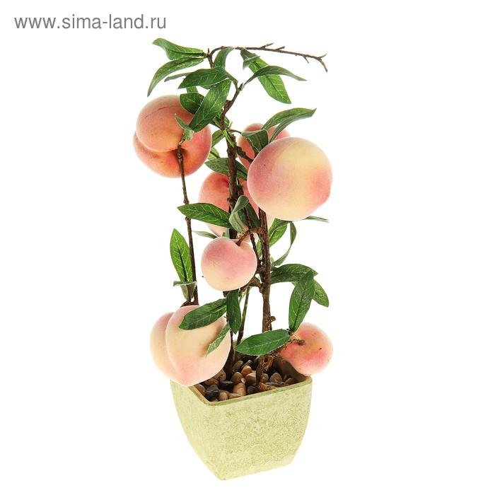 """Бонсай """"Персиковое дерево"""" 7 плодов"""