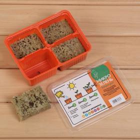 Набор для выращивания микрозелени «Вырасти сам микрозелень», Капуста красная, лоток 135 × 185 × 60 мм