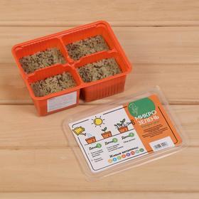 Набор для выращивания микрозелени «Вырасти сам микрозелень», Мизуна, лоток 135 × 185 × 60 мм