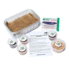 Набор для выращивания микрозелени My Greens, 5 культур: горох, горчица, редис, редис розовый, рукола