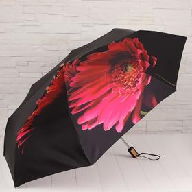 Зонт автоматический, облегчённый, «Гербера», 3 сложения, 8 спиц, R = 51 см, цвет чёрный