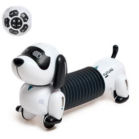 Robot-Dog Interactive