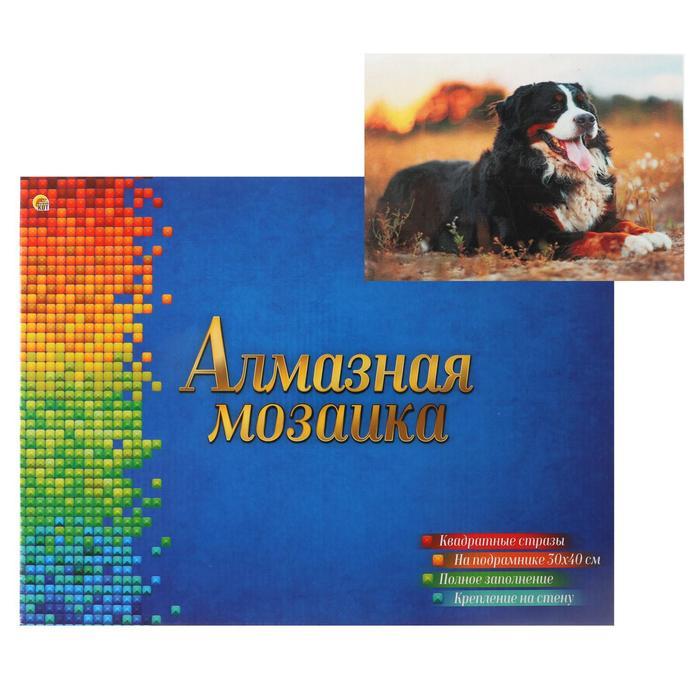 Алмазная мозаика квадратная 30×40 см, полное заполнение, 28 цв. «Бернский скотт в поле» - фото 1507810