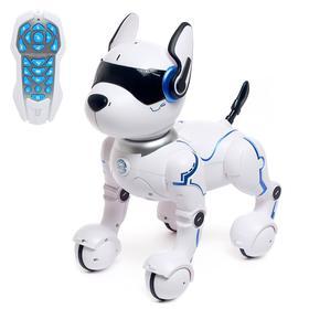 Robot - dog, radio-controlled