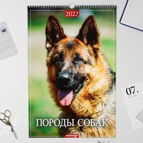 """Календарь перекидной на ригеле """"Породы собак"""" 2022 год, 320х480 мм"""