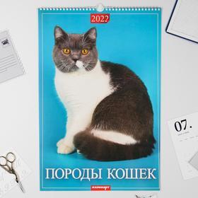 """Календарь перекидной на ригеле """"Породы кошек"""" 2022 год, 320х480 мм"""