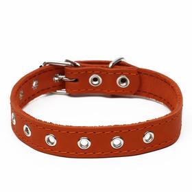 Ошейник кожаный однослойный, безразмерный, 56 х 2.5 см, оранжевый