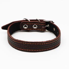 Ошейник кожаный с тиснением на синтепоне, 55 х 2.5 см, ОШ 35-45 см, коричневый