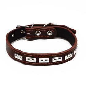 Ошейник кожаный на синтепоне, украшенный, 55 х 2.5 см, ОШ 35-45 см, коричневый