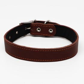Ошейник кожаный на синтепоне, 70 х 3,5 см, ОШ 45-60 см, коричневый