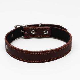 Ошейник кожаный на синтепоне, 65 х 3 см, ОШ 40-55 см, коричневый