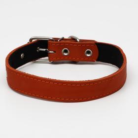 Ошейник кожаный на синтепоне, 65 х 3 см, ОШ 40-55 см, оранжевый