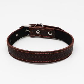 Ошейник кожаный с тиснением на синтепоне, 65 х 3 см, ОШ 40-55 см, коричневый