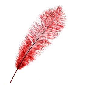 Перо для декора, длина от 45 до 50 см, цвет бордовый