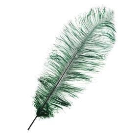 Перо для декора, длина от 45 до 50 см, цвет темно-зелёный