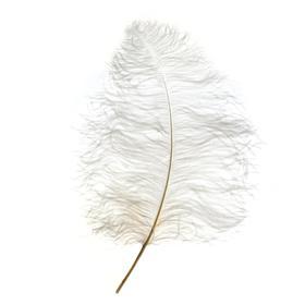 Перо для декора, длина от 45 до 60 см, цвет белый