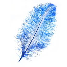 Перо для декора, длина от 45 до 60 см, цвет синий