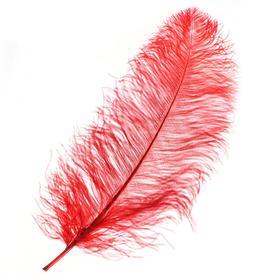 Перо для декора, длина от 45 до 60 см, цвет бордовый