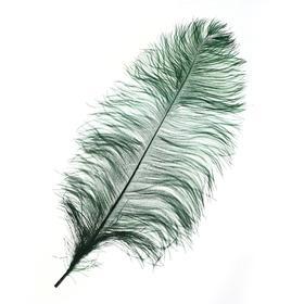 Перо для декора, длина от 45 до 60 см, цвет темно-зелёный