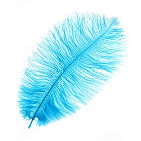 Перо для декора, размер: 25-30 см, цвет голубой