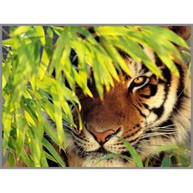 Алмазная мозаика «Тигр в засаде» 28×20см, 18 цветов