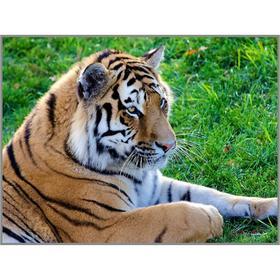 Алмазная мозаика «Тигр на лужайке» 27×20см, 28 цветов