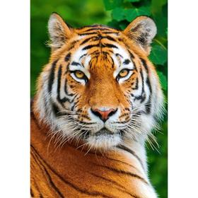 Алмазная мозаика «Тигр» 29.5×20.5см, 28 цветов