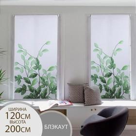 Штора рулонная «Ветви», блэкаут, 120×200 см