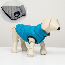 Куртка для собак двухсторонняя с воротником, XL (ДС 72, ОШ 68, ОГ 92 см), голубая/серая