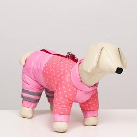 """Комбинезон для собак  """"Горошек"""", размер 14 (ДС 32, ОГ 42, ОШ 31 см), розовый"""