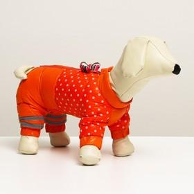 """Комбинезон для собак  """"Горошек"""", размер 14 (ДС 32, ОГ 42, ОШ 31 см), красно-рыжый"""