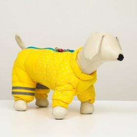 """Комбинезон для собак  """"Горошек"""",  размер 20 (ДС 43 см, ОГ 56 см, ОШ 41 см), жёлто-голубой"""