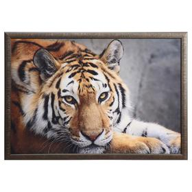 """Картина велюр """"Взгляд тигра"""" 100х70 (105х74) см"""
