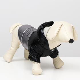 """Куртка для собак """"Космонавт"""", размер XS (ДС 17, ОШ 18-22 ОГ 27-32), чёрно-серебряная"""