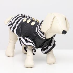 Курточка для собак с воланами,размер 6 (ДС 43,ОШ 44, ОГ 60 см), чёрная