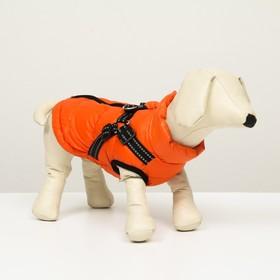 Куртка для собак со шлейкой, размер 12 (ДС 28 см, ОГ 38 см, ОШ 27 см),  коралловая