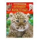 Детская энциклопедия «Детеныши животных»