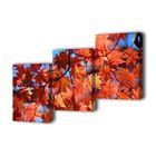 """Модульная картина на подрамнике """"Осенние листья"""", 3 — 50×70 см, 150x70 см"""
