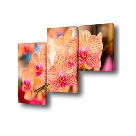 """Картина модульная на подрамнике """"Орхидея"""" 1-50*50, 2-50*75 см, 150x75 см"""