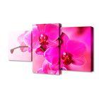 """Модульная картина на подрамнике """"Орхидеи"""", 26×50 см, 26×40 см, 26×32 см, 80×50 см"""