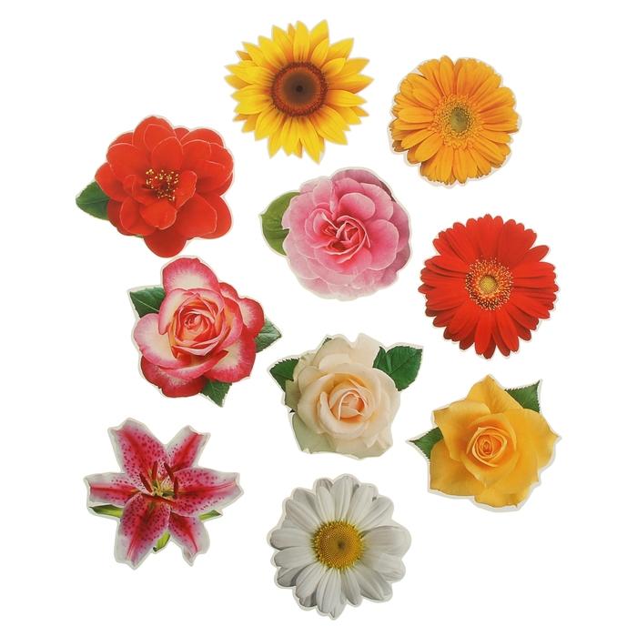 Цветы картинки цветные для оформления распечатать и вырезать, днем рождения братан