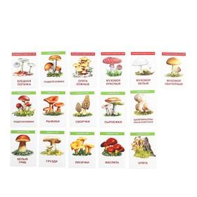 """Карточки обучающие """"Грибы"""" 16 шт., 6,3 х 8,7 см"""