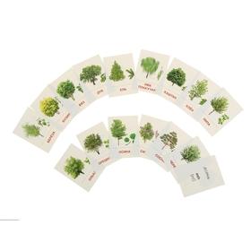 """Карточки обучающие """"Деревья и кустарники"""" 16 шт., 6,3 х 8,7 см"""