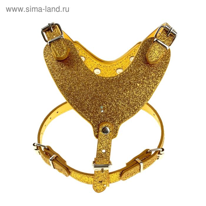 """Шлейка из экокожи """"Рантье"""", золотистый, обхват шеи 28-40см, обхват груди 44-63см, размер 3"""